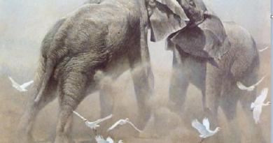 Коли два слона б'ються, страждає трава – це все, що я знаю про політику…